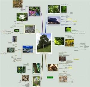 roberto-vidales-trees